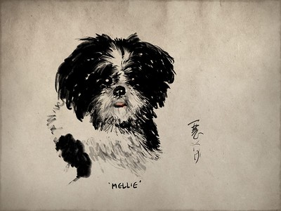 iPad sketch of my niece's dog.