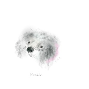 My in-law's Cockapoo, Panda.  iPad sketch.