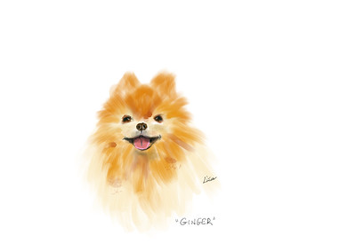 iPad sketch of Ginger, my nephew's dog