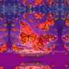 11x11_Butterfly_sunshine_flying_2iin
