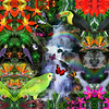 11x14_rainbow_rainforest_2inbrdr