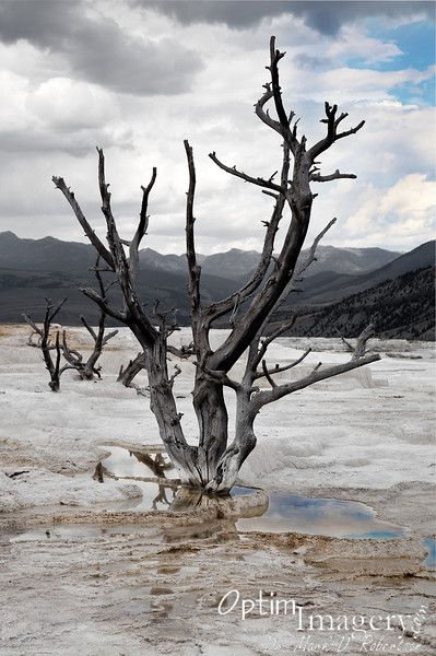 MAMMOTH HOT SPRINGS, WYOMING