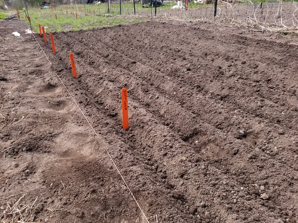 soil being furrowed to plant grains