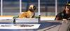 Zamboni Guide Puppy 3