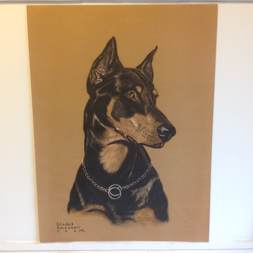 "Antique Print of Doberman Pinscher by Gladys Emerson Cook (1899-1976) . Size 12"" x 16"", unframed.  <br /> <br /> Gladys Emerson Cook is perhaps best known for her delightful drawings of dogs, many of which were used as book illustrations.<br /> <br /> Donated by GMPR<br /> Shipped by Helen Bryan<br /> Shipping Paid by Winner<br /> Starting Bid $15"