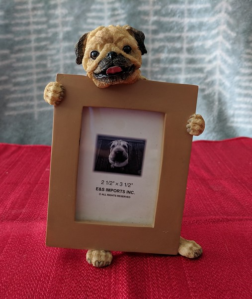 Pug holding Photo Frame