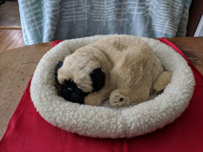 Pug Sleeping in Bed - damaged