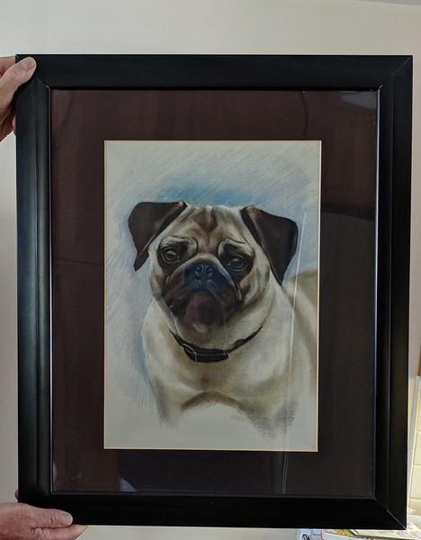 Fawn Pug Matted Print