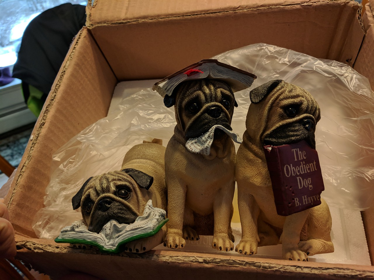 Obedient Pugs