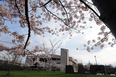 CFA Blossoms. Photo by Evan Cantwell, Creative Services: GMU