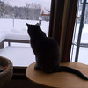 A cat contemplates recent lake-effect snowfall in Long Lake Township. Photo by Ronald Smith.