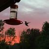 tcrGOeyes hummingbird 0826