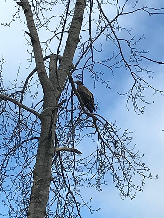 Big vulture ... not sure what he's looking at. Photo by Sharon Geisler.