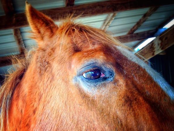 Record-Eagle/Dan Nielsen<br /> A horse takes a close look at a northern Michigan farm.