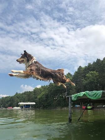 Luna leaps into Green Lake. Photo by Leah Davis.