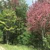 Foliage starting to change on Boardman River Road in Kalkaska. Photo by Cheryl K. Gershbacher.