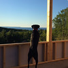 Manitou, or Mani, looks out at North Manitou Island from a home under construction. Photo by Tom and Melissa Heller.