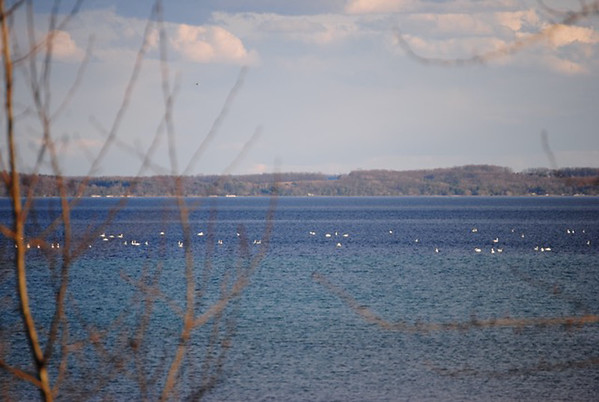 Photo by Debbie Marsh<br /> Migrating snow geese on Grand Traverse Bay West Arm.