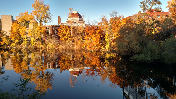 A view of foliage in downtown Traverse City. Photo by John Harding.