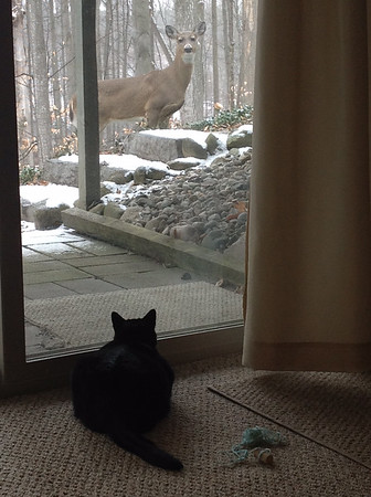 Oreo the cat recently met an outdoor visitor from his new home. Photo by Carol and Ernie Ross.
