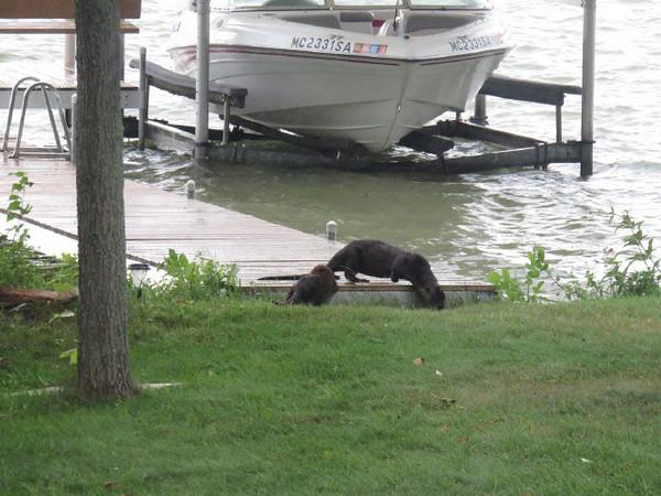 tcrGOeyes otters 0923