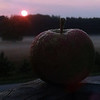 Fall time is apple time. Photo by Donna Weathers.