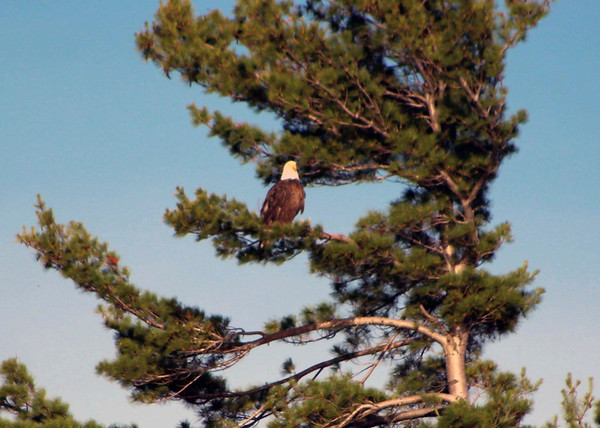 An eagle looks out over Lake Leelanau. Photo by Gary Risbridger.
