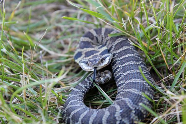 tcrGOeyes snake 0817