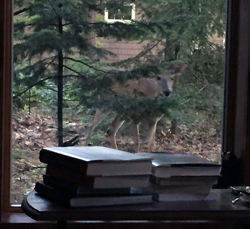 A deer gazes into the window of a Rapid River home. Photo by Loretta Grobe.