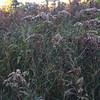 tcrGOeyes weeds 1019