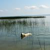 tcrGOeyes dog 0817