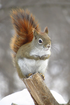 A squirrel in the backyard. Photo by Michael Novak.