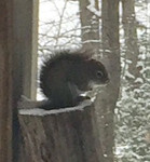 Squirrel snuggles up and observes the snow in Lake Ann. Photo by Jan Zolik.