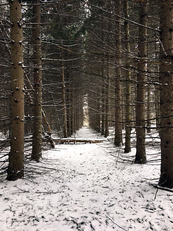 """Fresh snow in the """"pines"""" at TC Commons.<br /> Photo by Russell VanHouzen."""