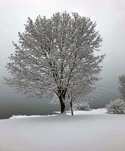 A tree on West Grand Traverse Bay. Photo by Roger Merriman.
