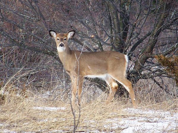 Oh Deer! in Glen Haven. Photo by Gloria Morkin.