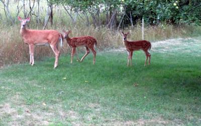 tcrGOeyes 0816 deers