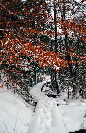 A walk on a trail by Sabin Lake. Photo by Brianna Sparkman.