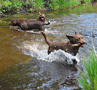 River dogs in Kalkaska: Chaka, Roo and Sis. Photo by Heather Spaleny.