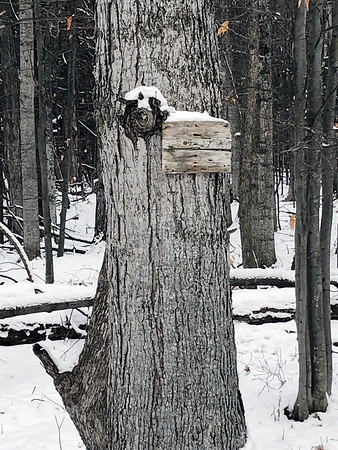 A snow-covered tree knot takes on an animal appearance. Photo by Russ VanHouzen.