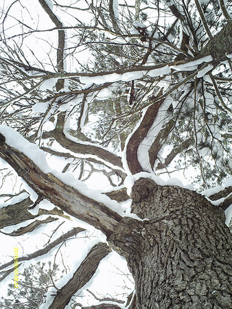 A snow-laden tree at Brown Bridge Quiet Area. Photo by Tammy Barber.