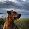 Cooper the dog and an East Bay storm. Photo by Michael Stephens.