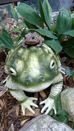 A frog piggybacks on a statue in a local backyard. Photo by Nancy Denison.