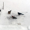 A red-bellied woodpecker, morning dove and a blue jay share a meal.<br /> Photo by Gary Kent Keyes.