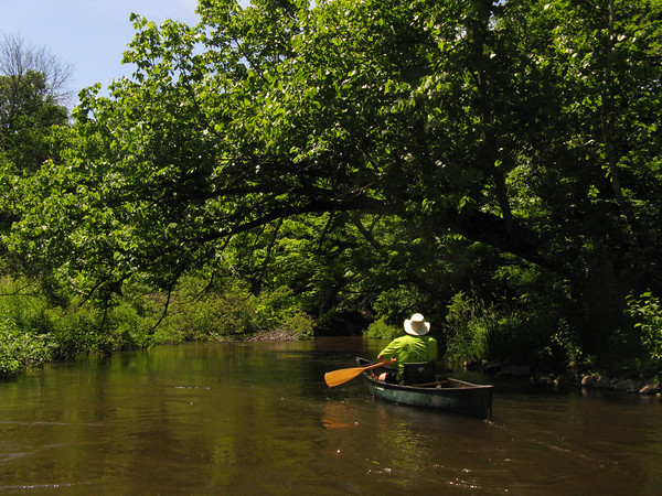 Canoeing through a tunnel of trees on the Betsie River. Photo by Jocelyn Trepte.