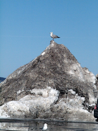 """King of the Mountain"" at Clinch Park. Photo by Meg McCardel."