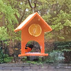 An oriole at our new feeder. Photo by Keli Hagan.