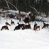 Deer visiting the Long Lake woods. Photo by Dennis Sobolewski.