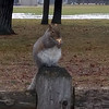 A squirrel eats at the Civic Center. Photo by Jerry Mikowski.