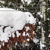 What animal does this snow pile resemble? Photo by Alan Blair.